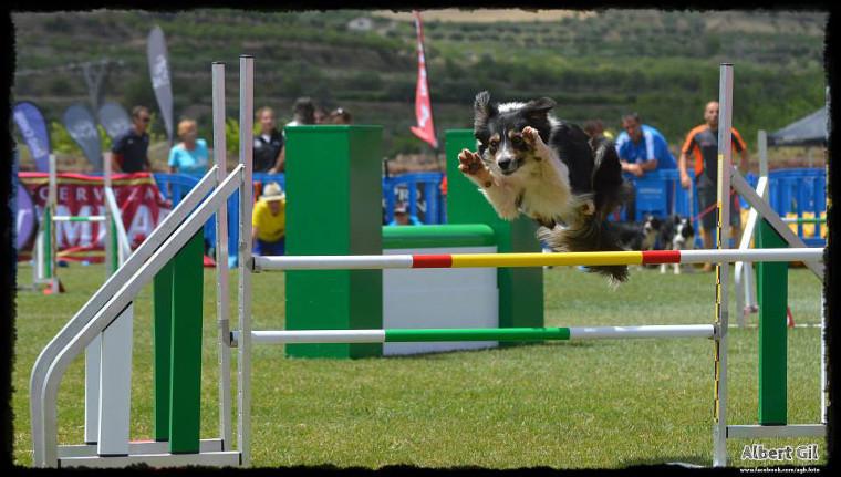 Les mascotes també tindran lloc a l'Esport i Natura gràcies a l'Espai gos
